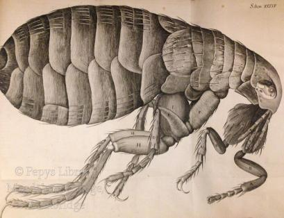 micrographia watermarked